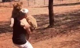 保護されたライオン、命の恩人に全身全力で抱っこをせがむ姿に関する海外の反応