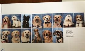 銃乱射事件のあったフロリダの高校で、卒業アルバムに14匹のセラピー犬のページが作られる(アメリカ)