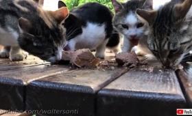 広い庭に住む猫のダルタニャン、仲間たちとお客さんのお出迎えに行く