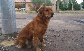 逮捕され、そのまま刑務所に入ってしまった飼い主の帰りを警察署前で1年間ずっと待ち続ける犬(アルゼンチン)