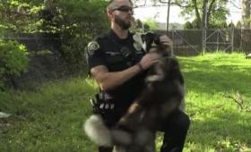 フェンスにくくりつけられたハスキーを救出した警官、すっかりほれ込み無事飼い主となる