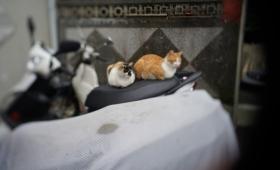 地震!その時猫は?台湾で地震が発生した時の猫たちの様子を記録した監視カメラ映像