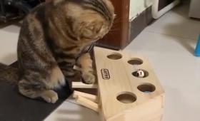 押すと出てくる…だとぅ?また猫が物理法則を学んだ模様