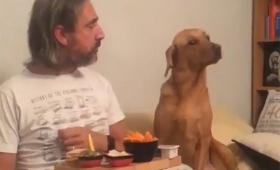見てないっすよ!飼い主が食べているのをじっと見ていた犬だが、飼い主に見られると?
