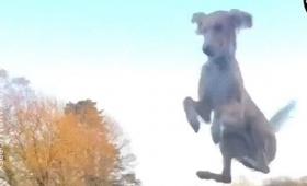 猫かと思ったら犬だった。フェンスを軽々と飛び越える犬