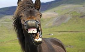 笑気ガスにうつ病やPTSD、アルコール依存症などの心の病を治す効果を確認