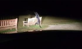 イギリスの田舎町に黒豹出現?公園のベンチにもたれかかるその物体の正体がついに判明