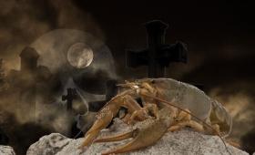 突然変異したクローンザリガニが墓地を完全占拠(ベルギー)