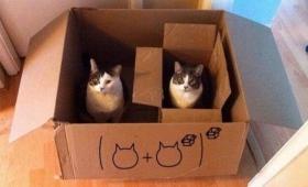 「この世界は猫と数式でできている!」高度な数学を体現している猫たち