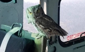 お礼を伝えたくて?山火事の消火活動を行っていたヘリコプターの中にフクロウが来訪する奇跡(アメリカ)