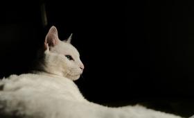 人の命を救った10の勇敢な猫たちの物語