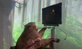 脳にチップを埋め込んだサルが「思考」だけでゲームをする映像が公開される