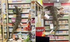 【動画】 コンビニに全長180cmの巨大トカゲが乱入 客は逃げだしトカゲは暴れ放題