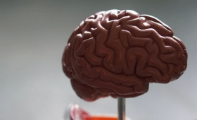 全身麻酔から目覚めるとき脳の「再起動」時間は領域ごとに差があるという研究結果